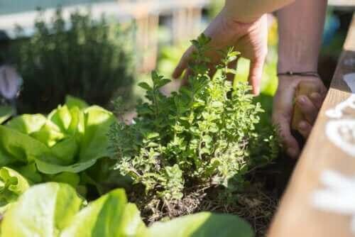 최고의 테라스 정원 가꾸기 비결