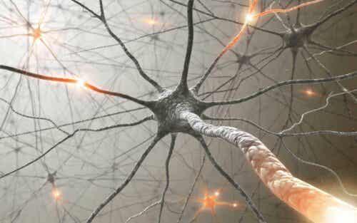 12가지 뇌신경의 기능