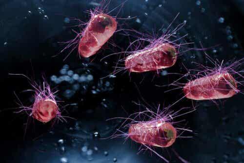전염성설사증 예방법
