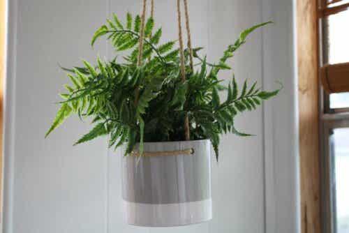 행잉 식물 화분 만드는 방법