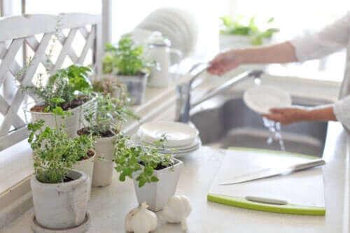부엌에 식물을 두면 좋은 점 5가지