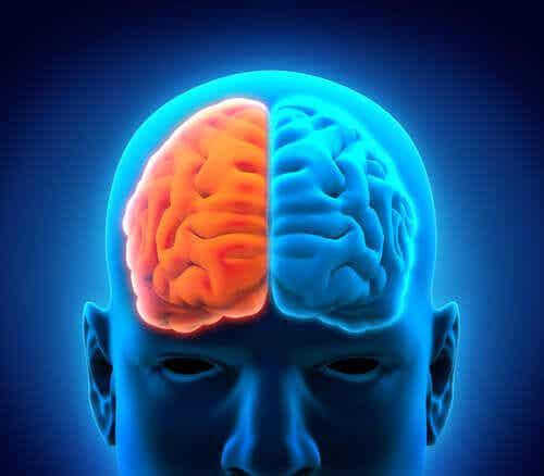 뇌 부위 대뇌 피질