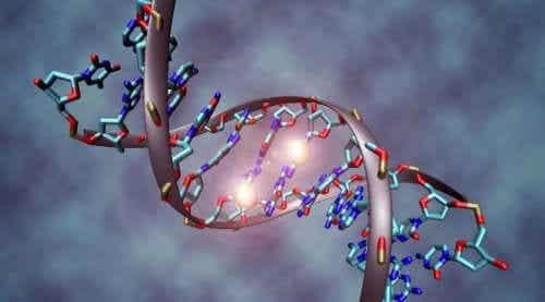 암의 유전적 근거에 대해 알고 있는가
