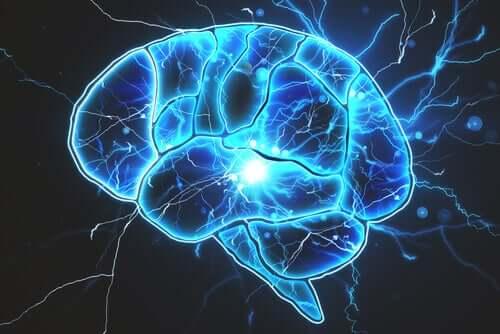 뇌에도 박테리아가 있을까?