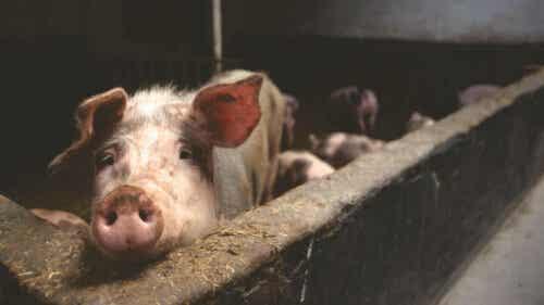 돼지 껍데기 지방 함량